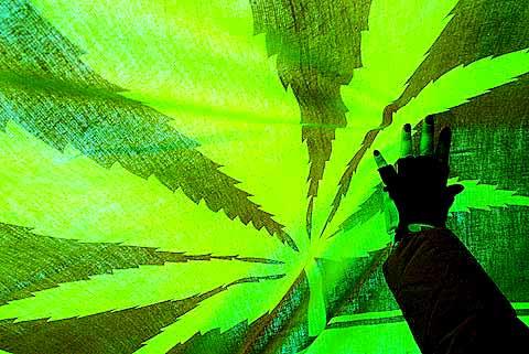 cannabisimg_2